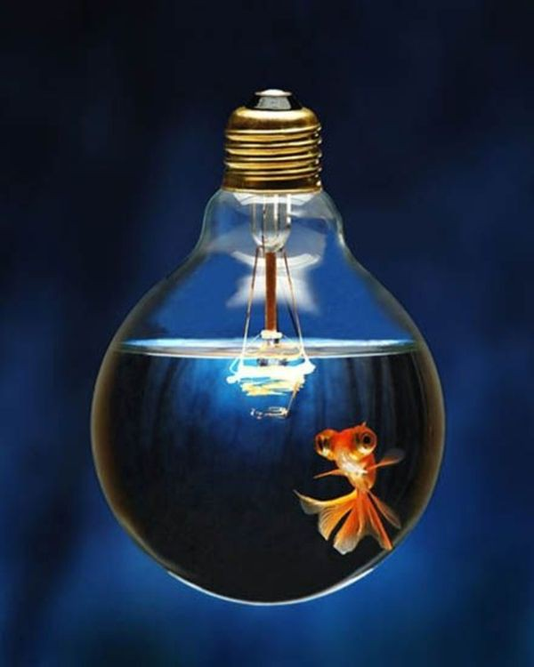 Pesce lampadina