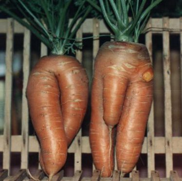 vegetali sessuati