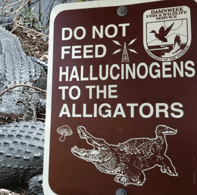 Allucinogeni agli alligatori