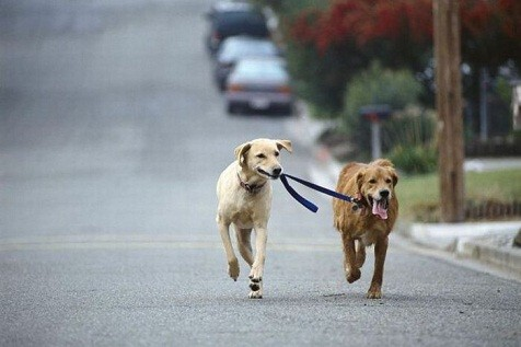 Cane al guinzaglio di cane