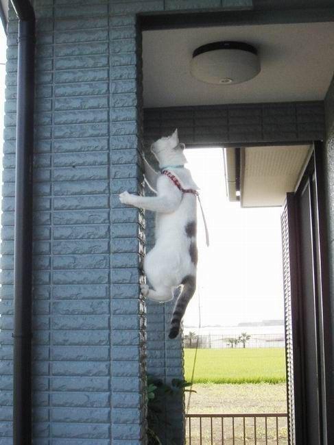 Gatto free climber