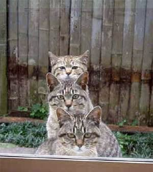 La banda dei gatti