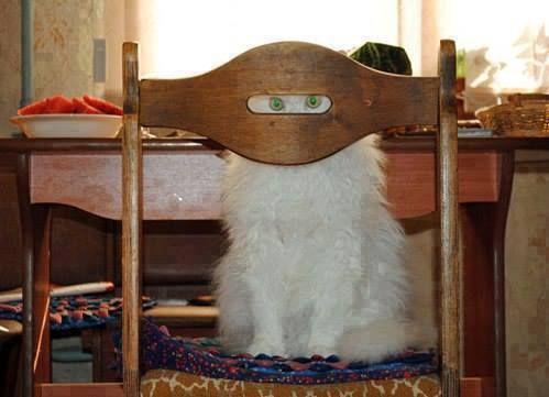 Gatto in maschera