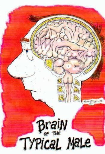 attività neuronale maschile