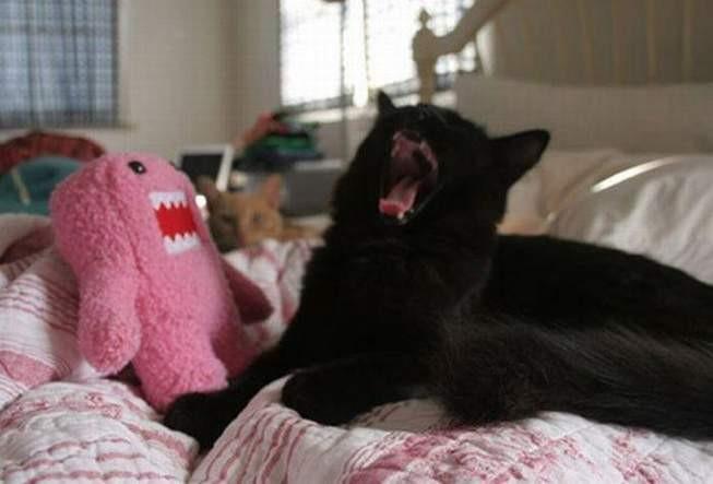 Due mostri che urlano