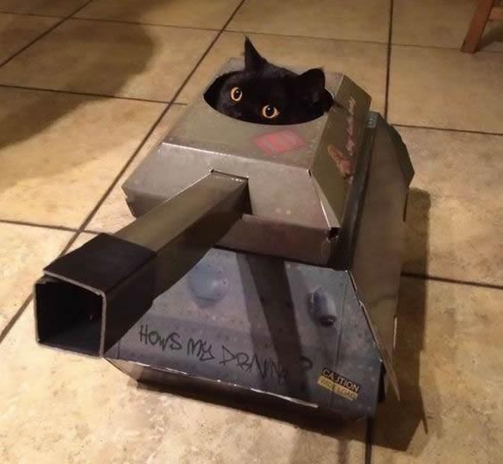 Gatto armato