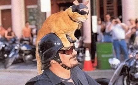 Gatto biker