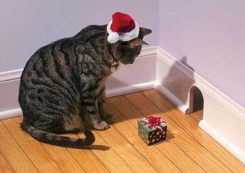 Natale per il gatto