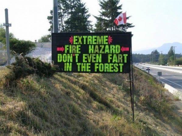 Niente peti nella foresta