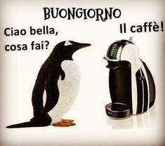 Pinguino miope