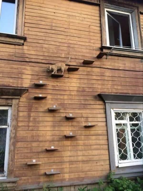 Scala per gatti
