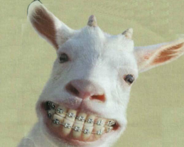 per avere denti belli da grande:)