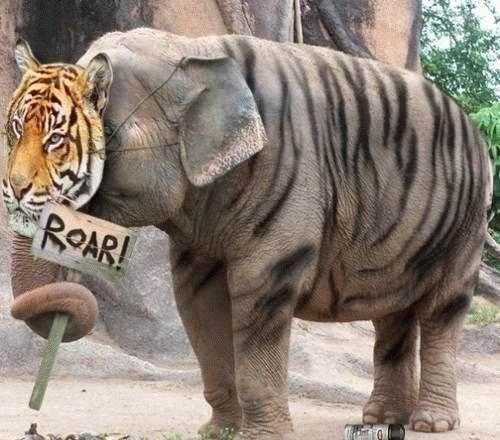 Il tigrelefante