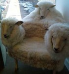 06-05-sheep-chair.jpg